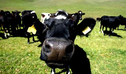 sulfamaster_biogas_sulfamaster_metano_letame_biogas_biocarburanti_sostenibili_1