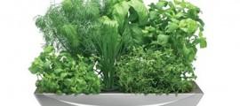 agricoltura_aeroponica_agricoltura_in_casa_aerogarden_aerogrow_agricoltura_aeroponica_1