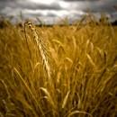 agricoltura_intensiva_azoto_biodiversita_nitriti_nitrati_inquinamento_acque_inquinamento_idrico_2