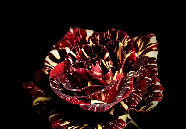 asknature_org_janine_benyus_biomimesi_biomimicry_ask_nature_ecodesign_15