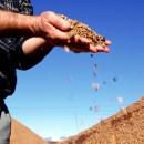 biomassa_bioliq_biocarburanti_biodiesel_biosyncrude_bioliq_biocarburante_3_generazione_3