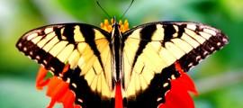 collettore_solare_biomimesi_tintura_solare_biomimesi_farfalla_celle_solari_biomimesi_2