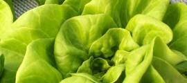agricoltura_acquaponica_coltivazione_acquaponica_agricoltura_idroponica_coltivazione_acquaponica_6