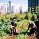 agricoltura_biologica_cina_agricoltura_biologica_cinese_alimentazione_biologica_cina_city_farm_5