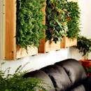 aria_pulita_con_piante_casa_appartamento_cov_composti_organici_volatili_3