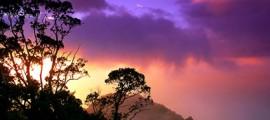 biodiversita_hawaii_programma_hawai_conservare_biodiversita_conservazione_specie_estinzione_biodiversita_1