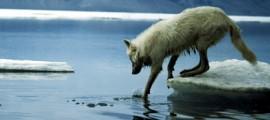 bolla_metano_artico_fuoriuscite_metano_siberia_laghi_metano_riscaldamento_globale_bomba_metano_2
