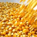 etanolo_mais_etanolo_cellulosa_biocarburanti_benzina_impatto_salute_impatto_ambiente_1