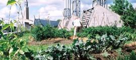 giardino_pensile_giardini_pensili_orto_pensile_orti_pensili_agricoltura_urbana_biologica_6