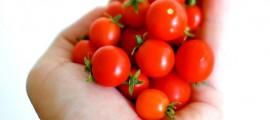 orto_urbano_agricoltura_urbana_agricoltura_citta_orto_citta_terra_condivisa_5