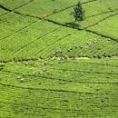 agricoltura_sostenibile_fertilizzante_sostenibile_fertilizzante_ecologico_fertilizzanti_naturali_fertilizzanti_azotati_2