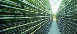 alghe_sapphire_produzione_olio_alghe_co2_biodiesel_sapphire_alghe_biodiesel_news_alghe_3