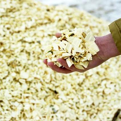energia_biomassa_agroenergia_pioppo_biomassa_energia_elettrica_da_biomassa_coltivazione_1