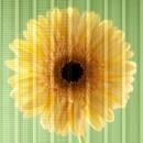 konarka_celle_solari_finestre_fotovoltaico_finestre_fotovoltaico_vetro_celle_solari_su_finestre_1