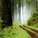 plastica_dagli_alberi_plastica_cellulosa_plastica_alberi_hmf_cellulosa_hmf_plastica_3