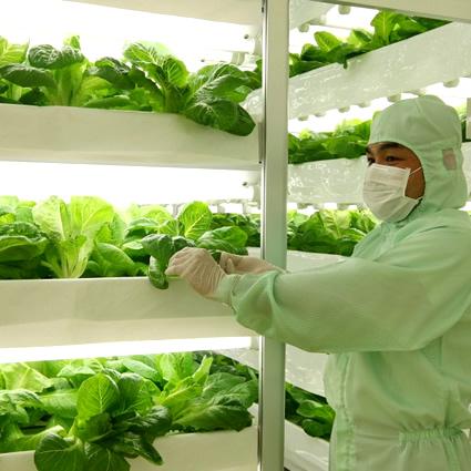 agricoltura_futuro_alimentazione_futuro_ogm_futuro_idroponica_agricoltura_idroponica_3