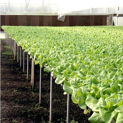 agricoltura_idroponica_urbana_agricoltura_idroponica_citta_agricoltura_urbana_idroponica_5