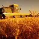 agricoltura_urbana_agricoltura_km0_agricoltura_fabbisogno_energetico_energia_agricoltura_1