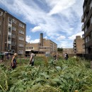 agricoltura_urbana_agricoltura_sostenibile_londra_agricoltura_urbana_agricoltura_citta_3
