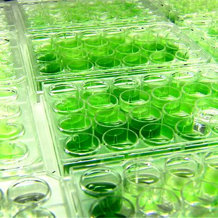 alghe_etanolo_biocarburante_alghe_plastica_etanolo_biocarburanti_4
