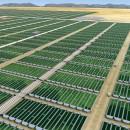 biocarburante_alghe_exxon_biodiesel_alghe_exxon_mobil_craig_venter_synthetic_genomics_5