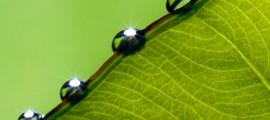 biomimesi_foglie_artificiali_biomimesi_produzione_energia_foglie_artificiali_biomimesi_energia_rinnovabile_3