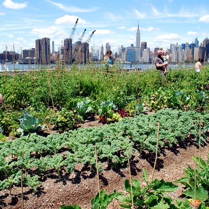 fattoria_urbana_agricoltura_urbana_fattorie_urbane_agricoltura_biologica_urbana_fattoria_citta_1