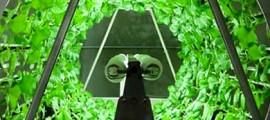agricoltura_idroponica_agricoltura_acquaponica_omega_garden_4