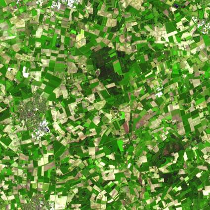 agricoltura_sostenibile_piante_perenni_agricoltura_naturale_piante_perenni_agricoltura_sostenibile_1
