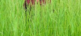 etanolo_biomassa_etanolo_cellulosa_etanolo_da_biomassa_etanolo_da_cellulosa_4
