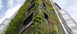 giardini_verticali_patrick_blanc_giardino_verticale_giardiniere_verticale_giardino_verticale_2