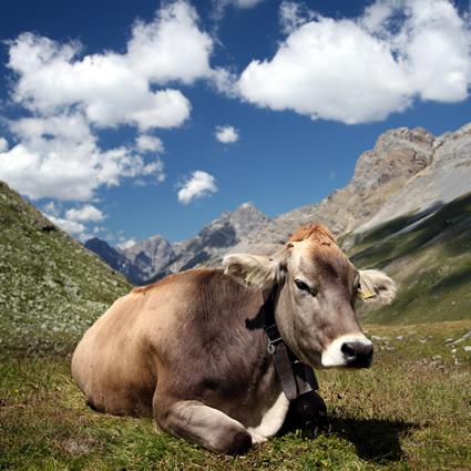 sicurezza_alimentare_carne_ormoni_carne_europa_ormoni_nella_carne_1