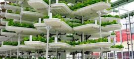 agricoltura_verticale_idroponica_valcent_agricoltura_idroponica_1
