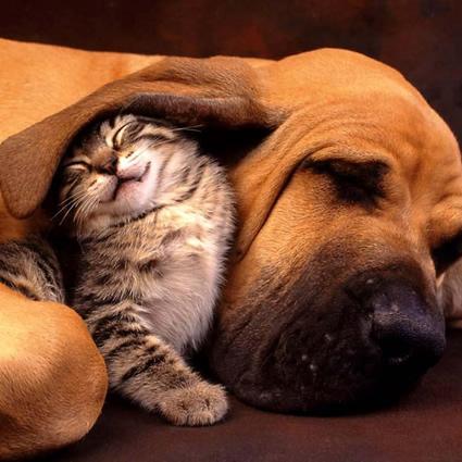 cani_gatti_antiecologici_animali_domestici_energia_4