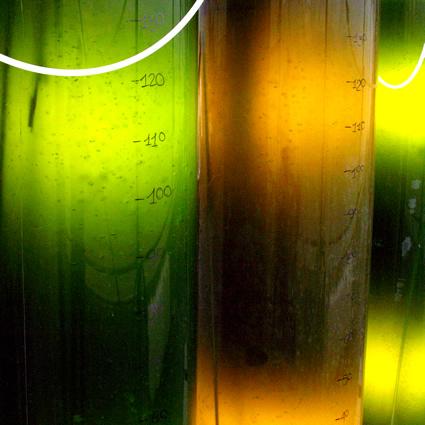 microalghe_microlife_alghe_biodiesel_alghe_biocarburanti_alghe_4