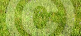 rizomi_torino_agricoltura_urbana_rizomi_guerrilla_gardenind_3