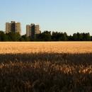 agricoltura_urbana_alimentazione_agricoltura_urbana_produzione_alimentare_locale_1