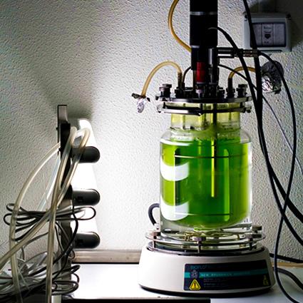 alghe_etanolo_alghe_biocarburante_alghe_biomassa_alghe_biobutanolo_4