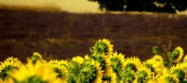 agricoltura_sostenibile_cop15_agricoltura_cambiamento_climatico_agricoltura_biologica_2