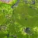 biocarburanti_alghe_coltivazioni_alghe_biocarburante_alghe_2