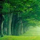 progettazione_verde_architettura_sostenibile_2