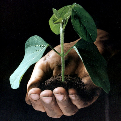 agricoltura_biodinamica_preparati_vegetali_biodinamica_agricoltori_biodinamici_maria_thun_2