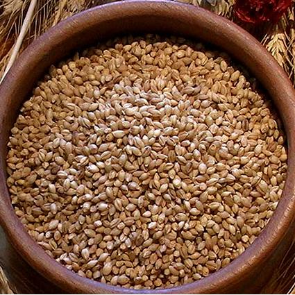 corso_alimentazione_cereali_2
