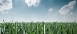 economia-rinnovabili-evento-paliano_1
