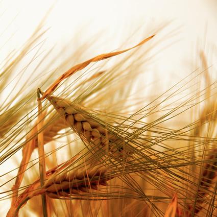 co2_carbone_agricolo_carbonio_co2_carbone_agricolo_terreno_carbone_agricolo_2