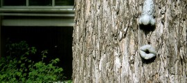 alberi_criminalita_1