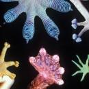 biomimesi, biomimesi natura, natura biomimesi