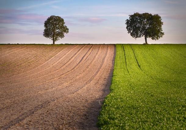 confagricoltura, energia da biomassa, agroenergia