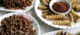 scienza-alimentare-insetti-europa-insetti