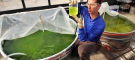 biocarburanti, biocarburanti seconda generazione, biofuel, biofuel biocarburanti